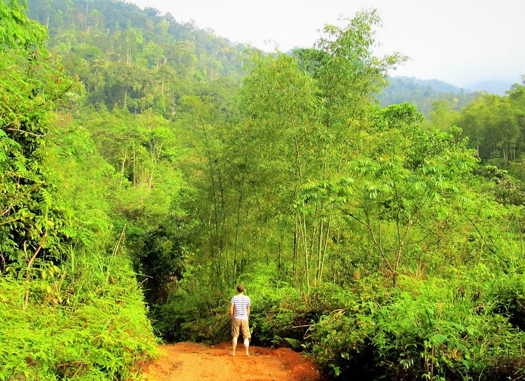 Bamboo forest near Lang Chanh, Thanh Hoa Province, northern Vietnam