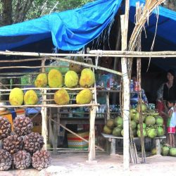 Tropical Fruit for sale on the 'Back Road'