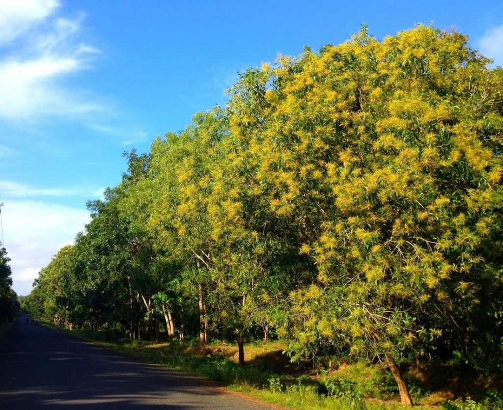The scenic, quiet road through Phước Bửu Forest