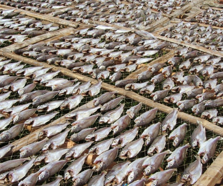 Drying fish on the road to Kê Gà