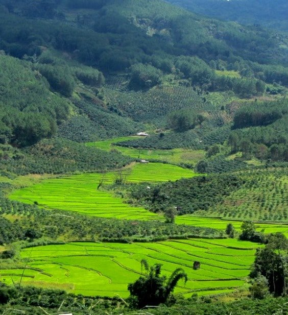 Terraced rice fields around Di Linh