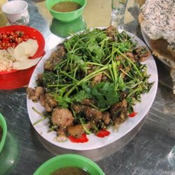 Cat meat: still widely available in Vietnam