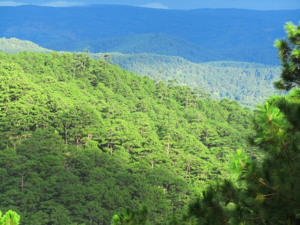 Pine forests north of Dalat, Vietnam