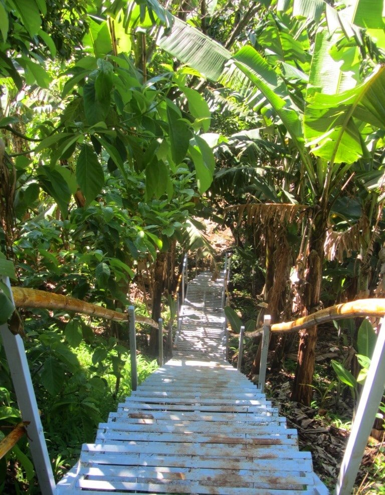 Stairs through bamboo to the waterfall