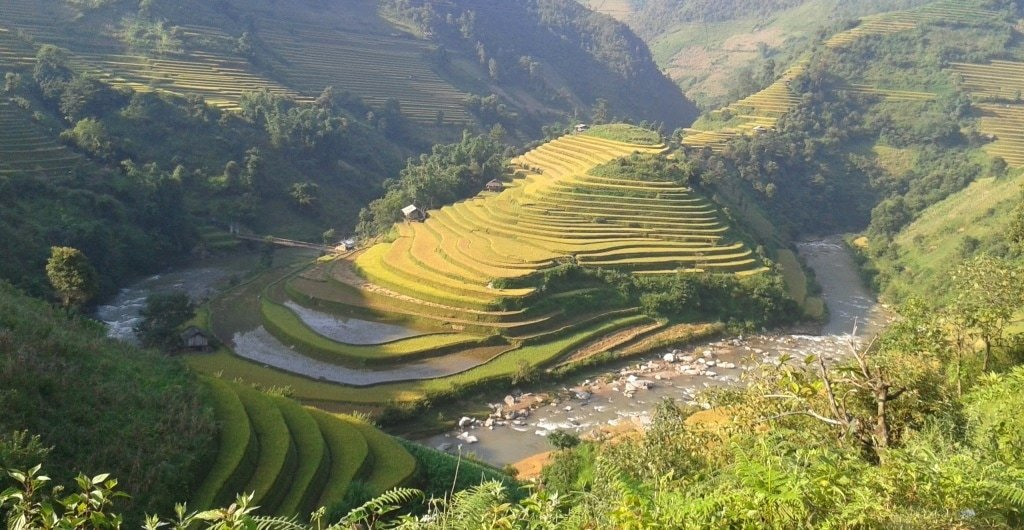 Dawn light on rice terraces