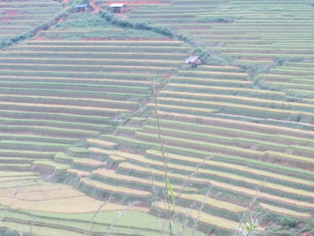 Starved of sunlight: rice fields, Mu Cang Chai