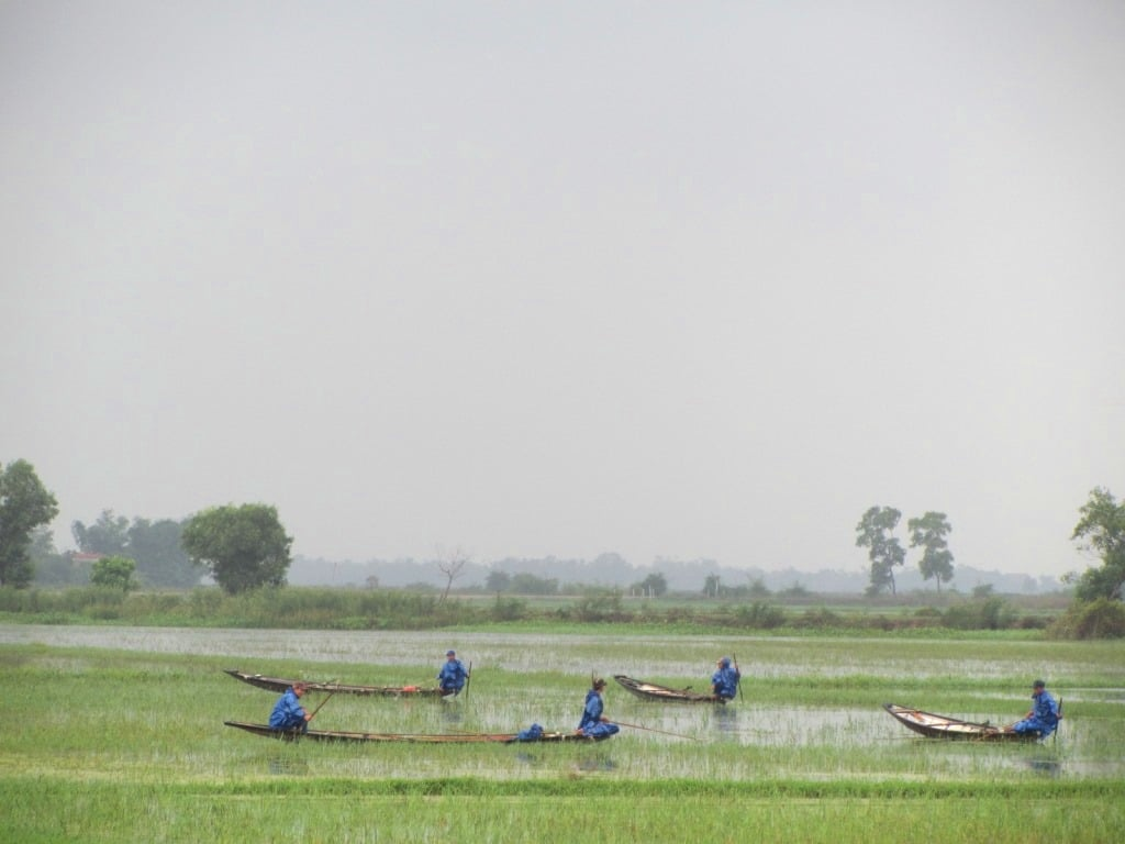 Boating in the flooded rice fields