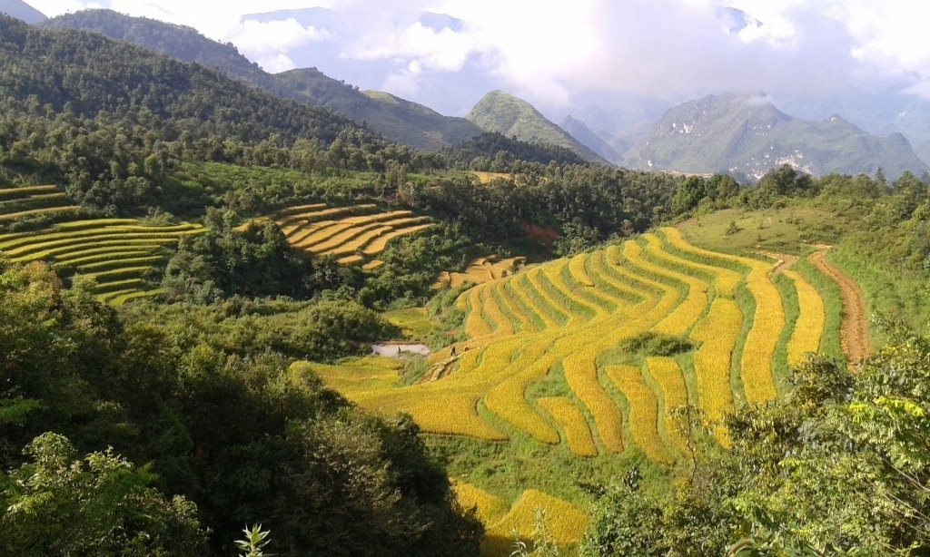 Terraced rice fields near Lai Chau