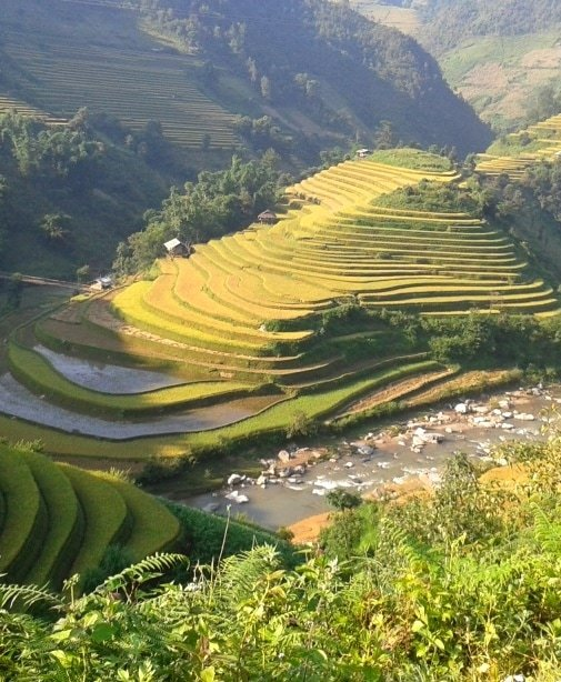 Colour & pattern, Mu Cang Chai rice terraces