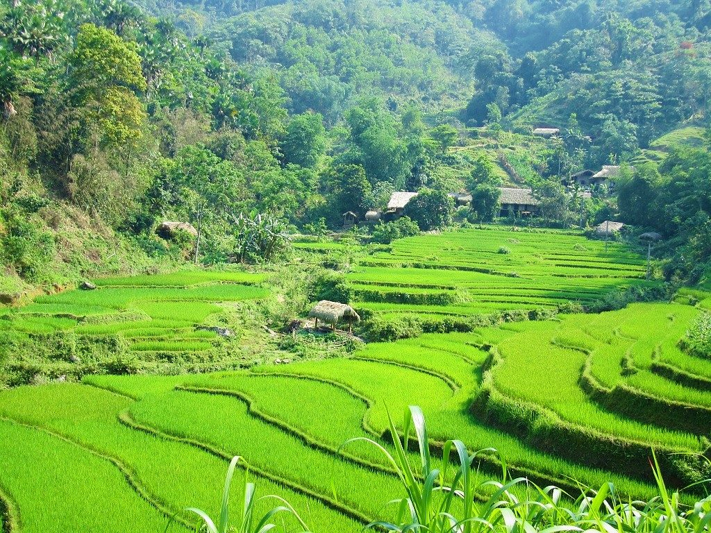 Rice terraces on the road to Xin Man, Ha Giang, Vietnam