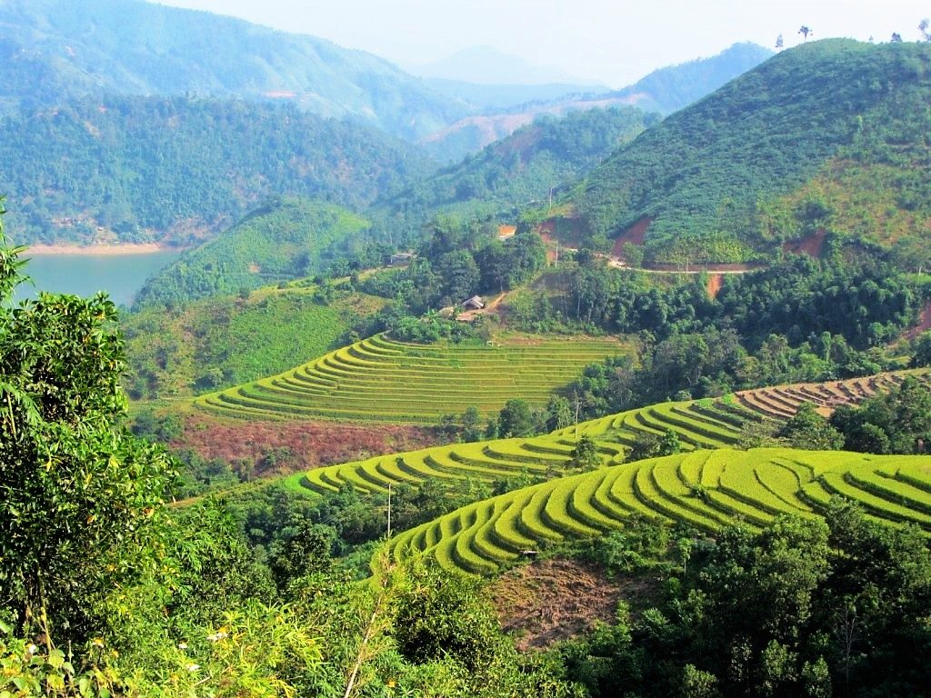Terraced rice fields on the road to Xin Man, Ha Giang, Vietnam