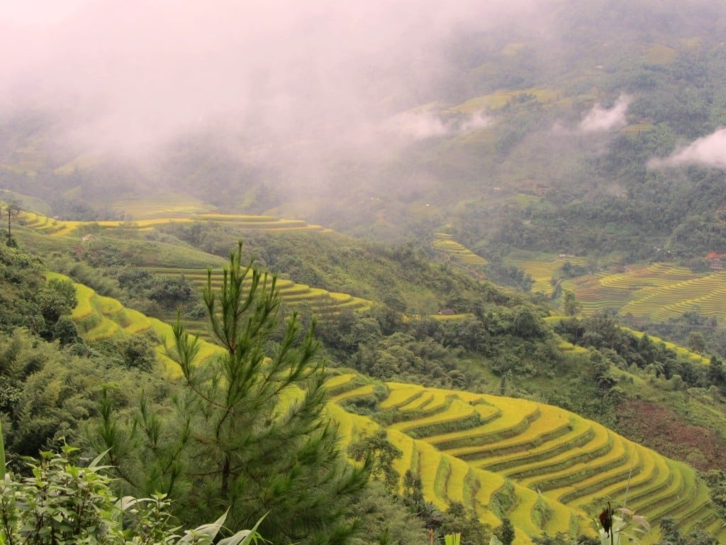 Terraced rice fields in the mist, Hoang Su Phi
