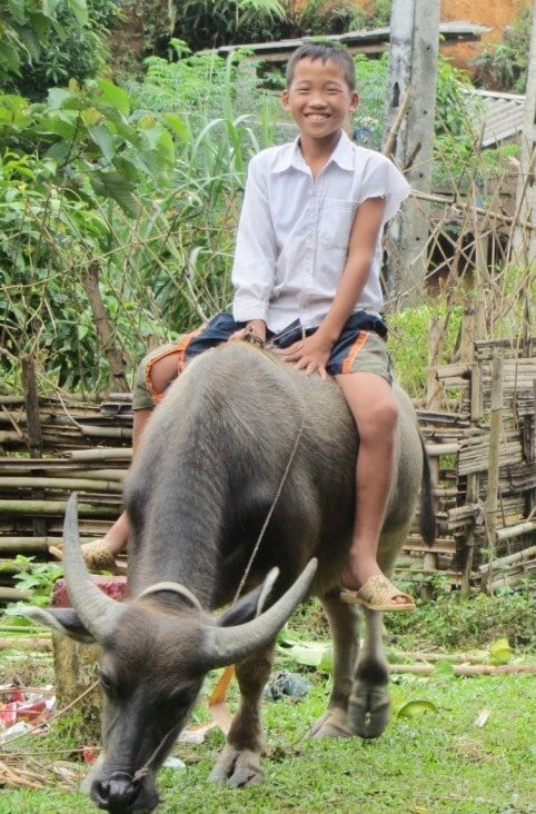 Boy rides a buffalo, Ha Giang Province