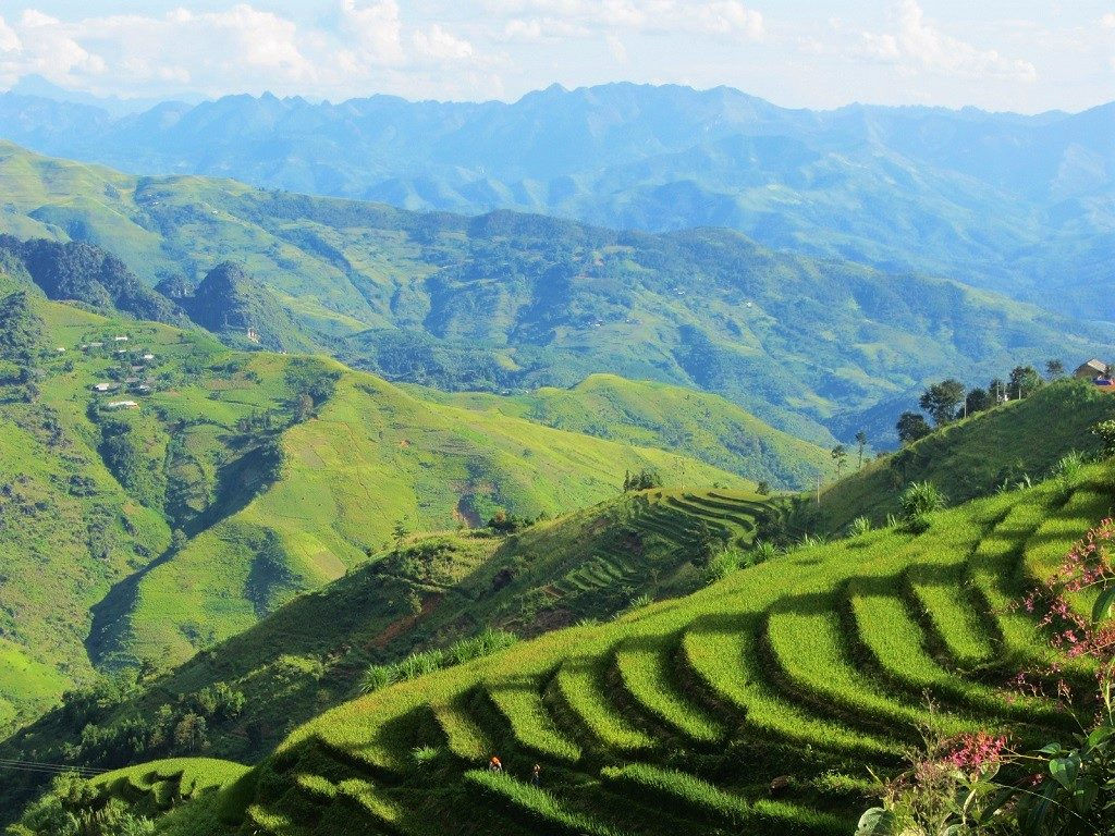 Rice terraces on the road from Meo Vac to Bao Lac, Ha Giang