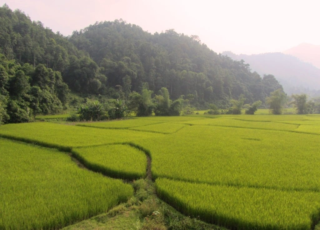 Rice fields, Bac Kan