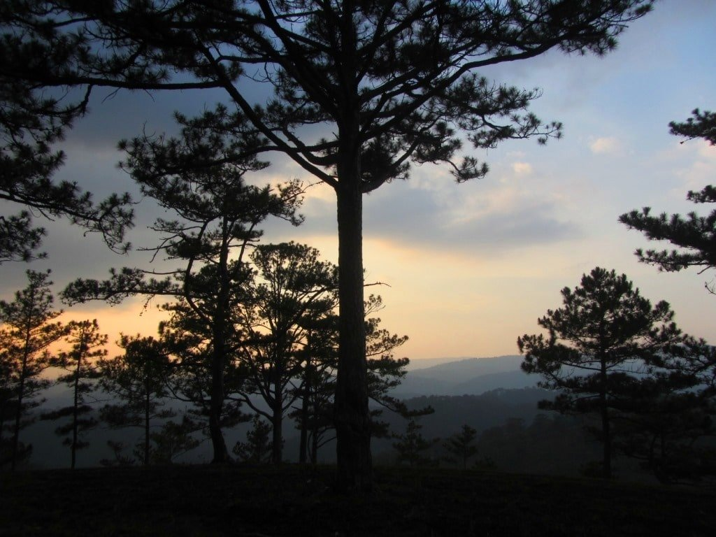 Pine forests and mountains, Dalat, Vietnam