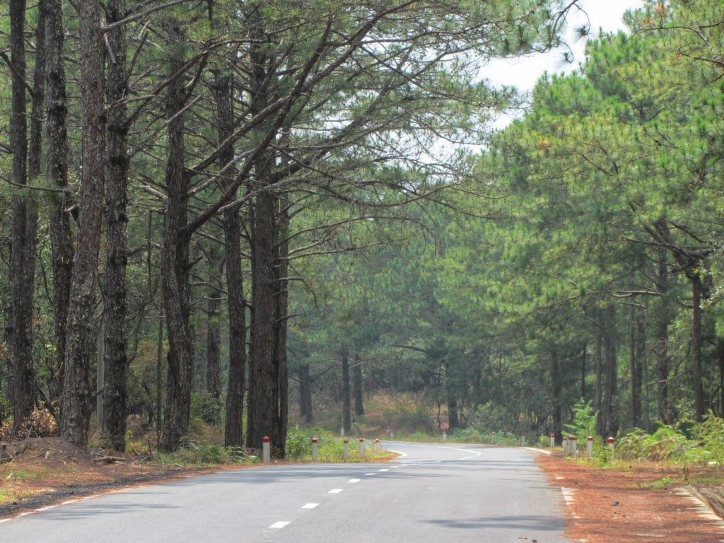 The Pine Tree Road, Dalat, Vietnam