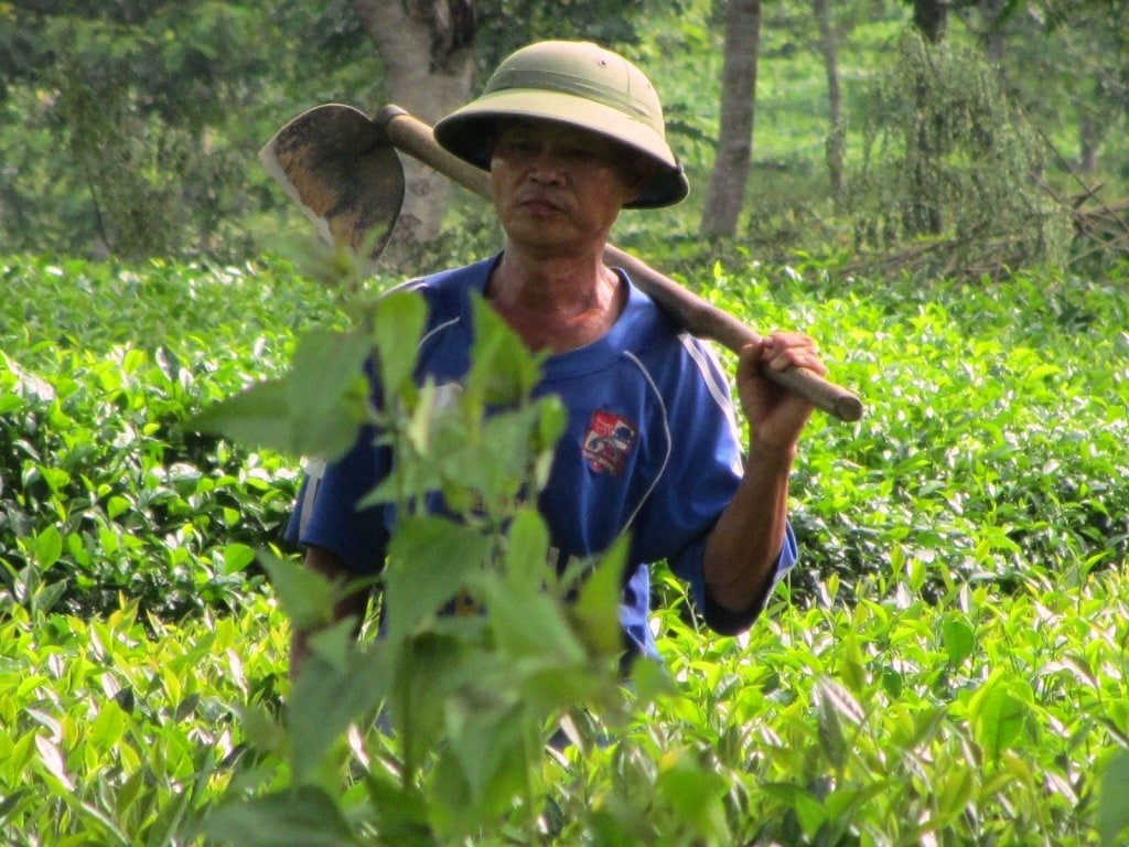 Pith helmeted farmer in northern Vietnam