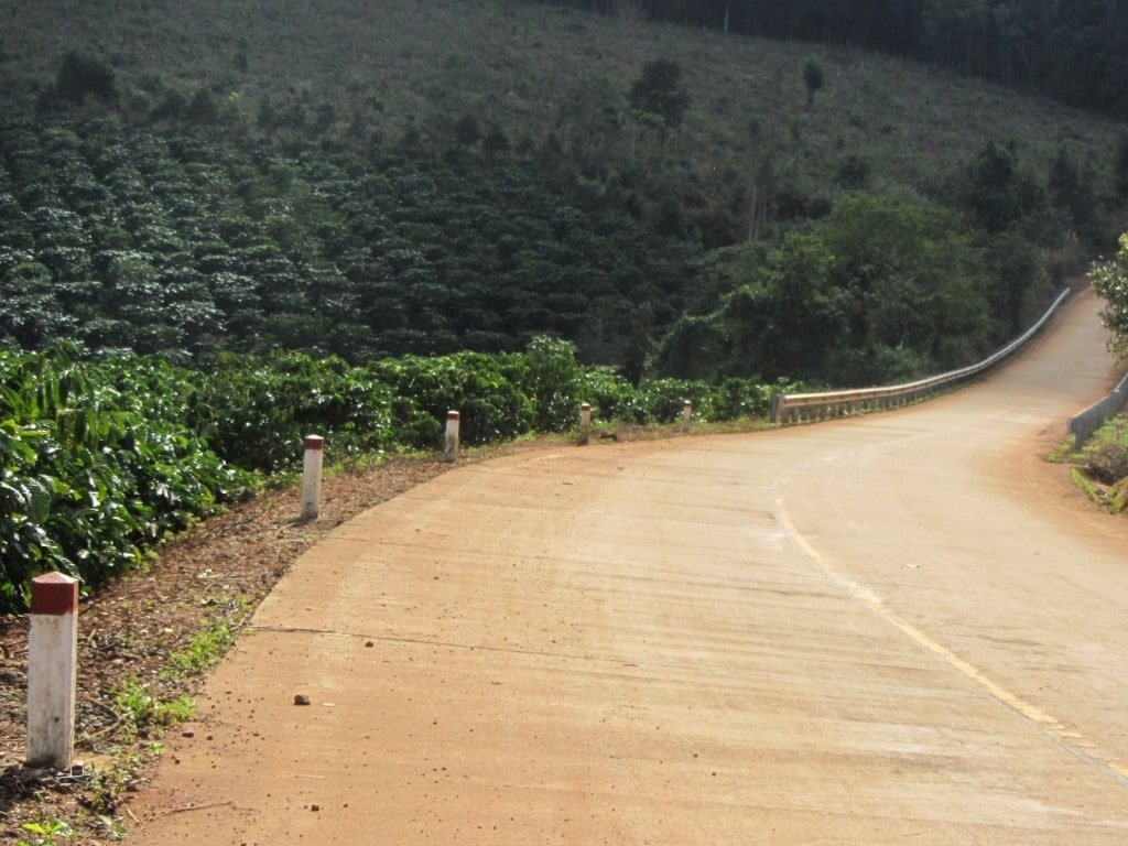 Coffee bushes, Truong Son Dong Road, Central Highlands, Vietnam