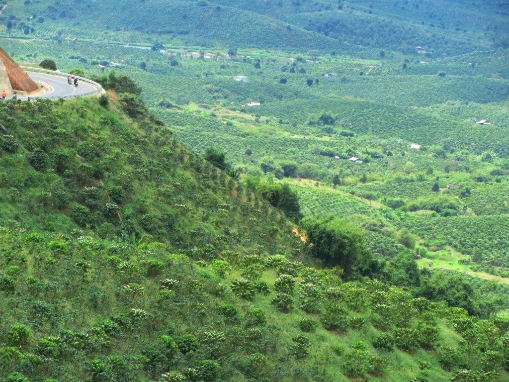 New roads to Dalat & coffee plantations, Vietnam