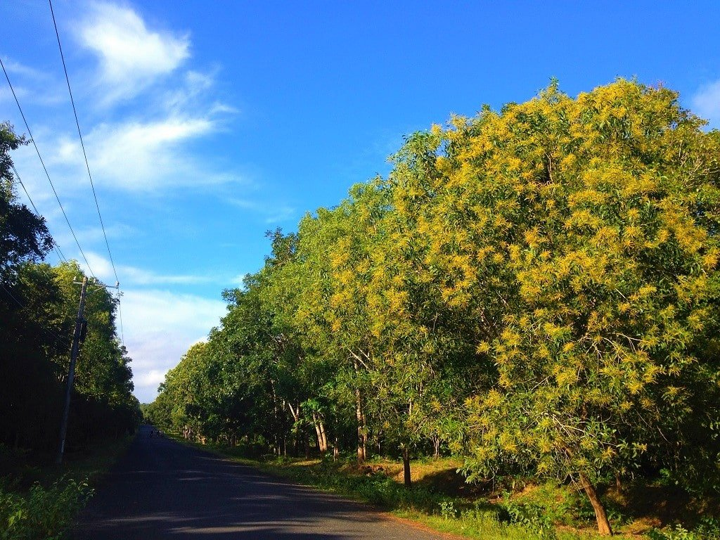 Ho Coc forest, the Ocean Road, Vietnam