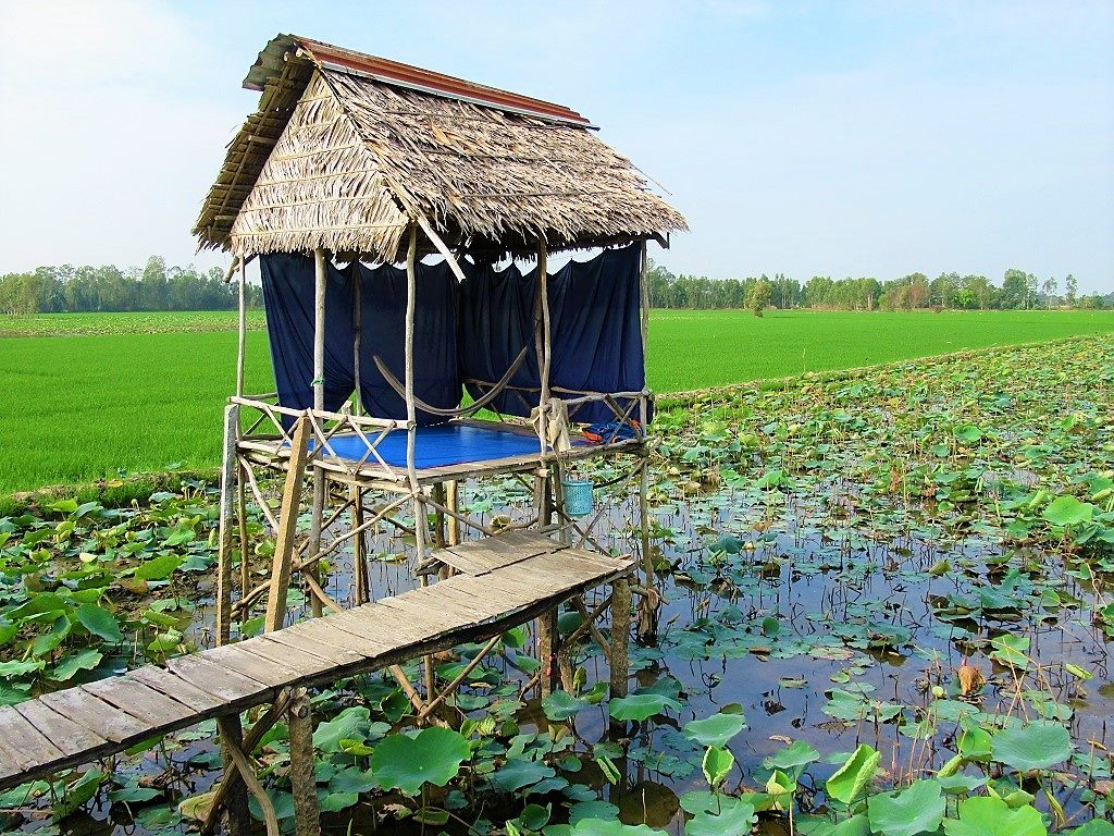 Floating Lotus Lake Homestays, Dong Thap Province, Mekong Delta