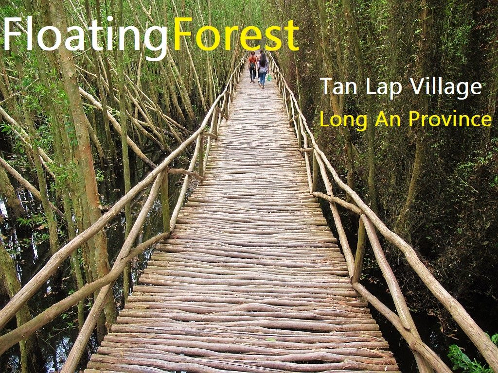 The Floating Forest of Tan Lap, Long An, Vietnam