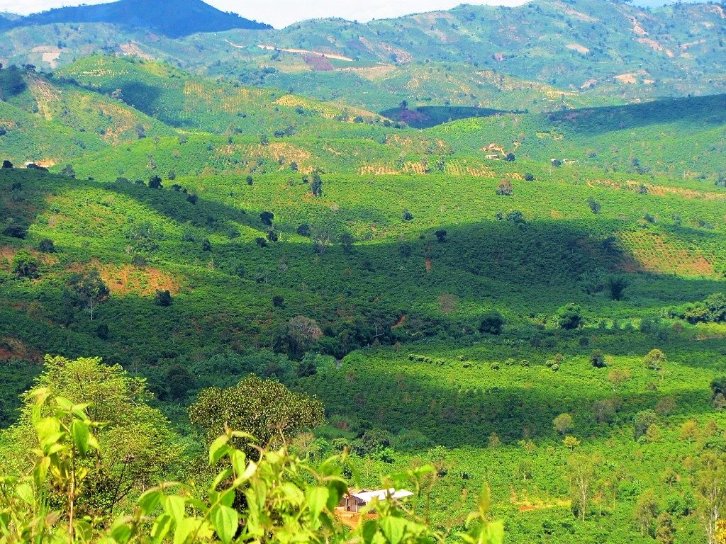 Landscape with coffee plantation, Bao Loc, Lam Dong, Vietnam