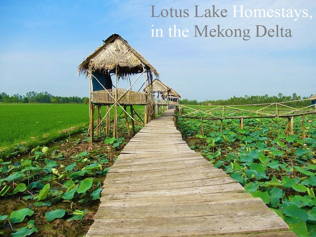Floating Lotus Lake Homestays, Mekong Delta, Vietnam