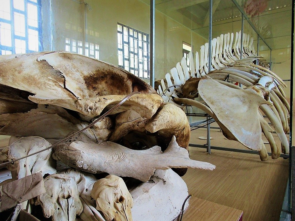 Whale skeleton at the whale temple, Nam Du Island