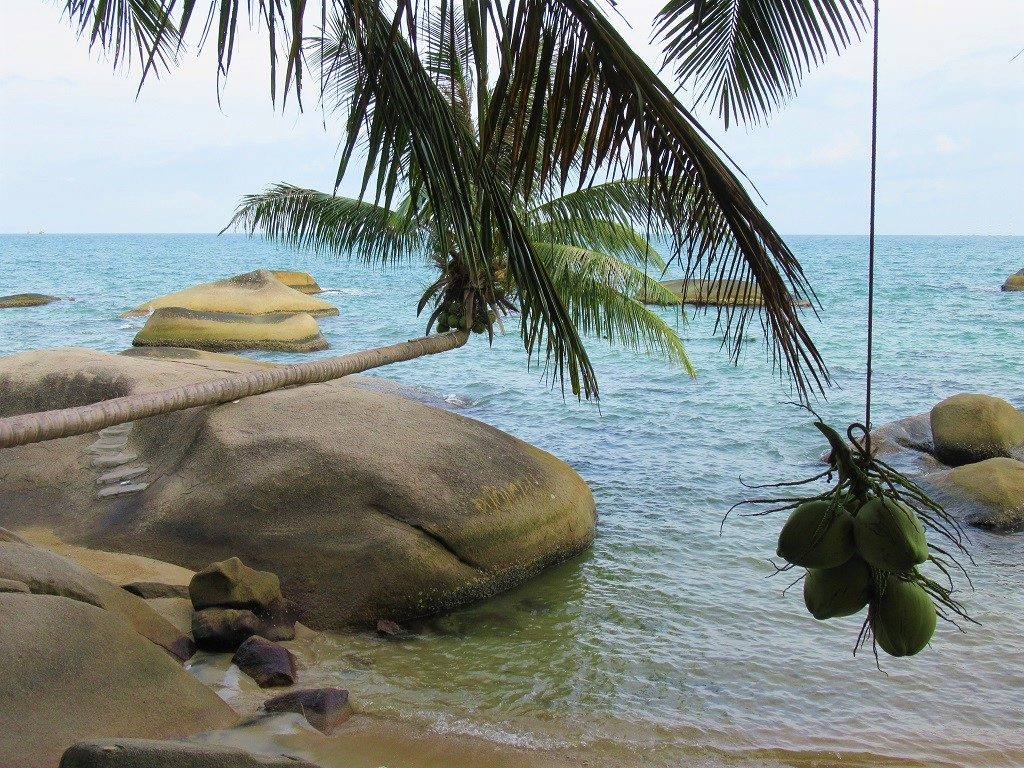 The lying coconut tree, Hon Son Island, Vietnam