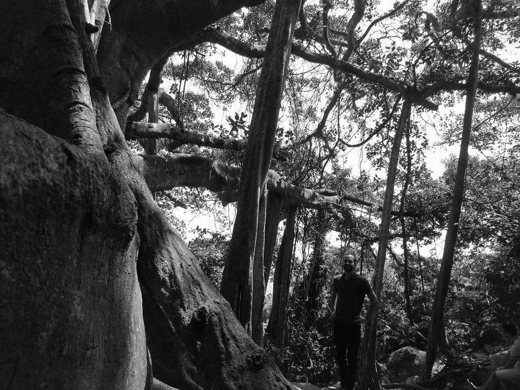 The Grand Old Banyan Tree, Son Tra, Danang