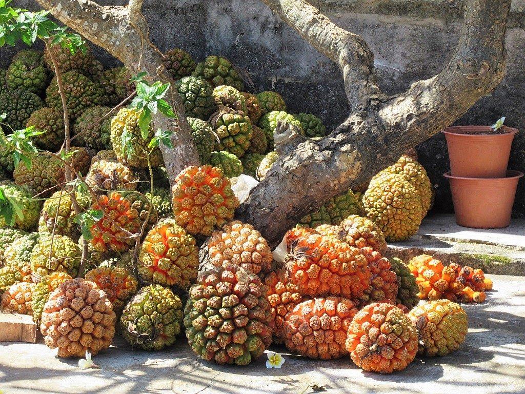 Fruit of the screwpine, Phu Quy Island, Vietnam