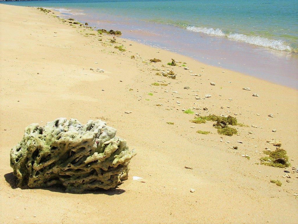 Coral on the beach, Hon Tranh Islet, Phu Quy Island, Vietnam