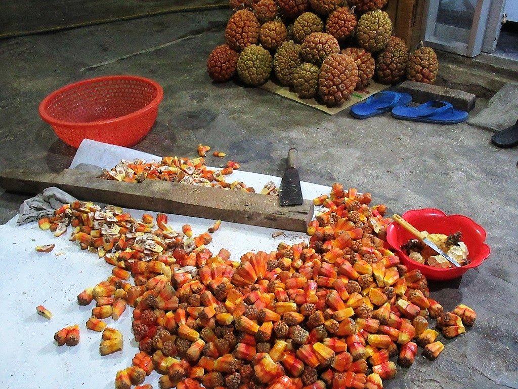 The fruit of the screwpine, Phu Quy Island, Vietnam