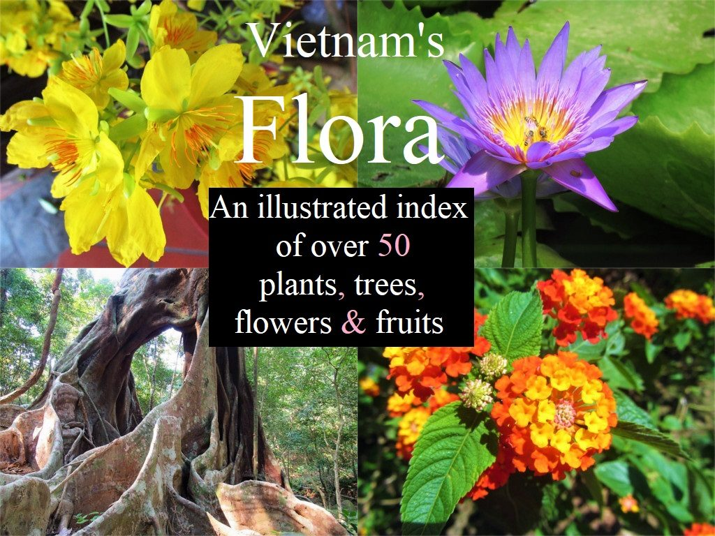 Plants Flowers Trees Of Vietnam Vietnam Coracle Independent