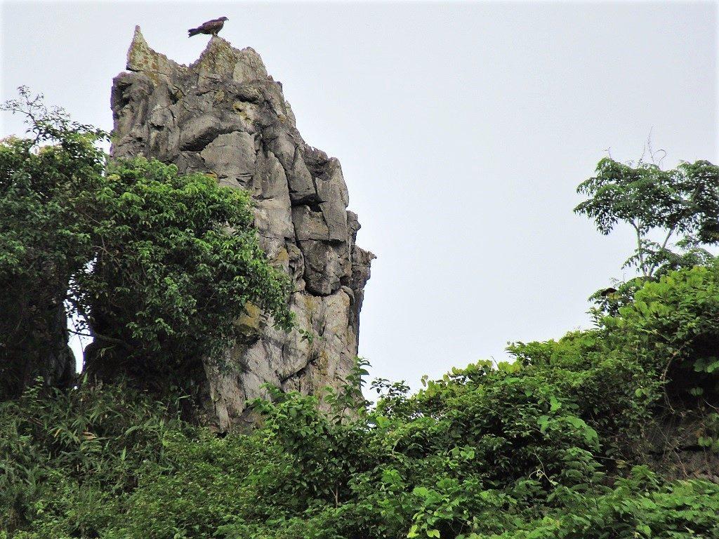 Bird of prey, Hidden Valley, Cat Ba Island, Vietnam