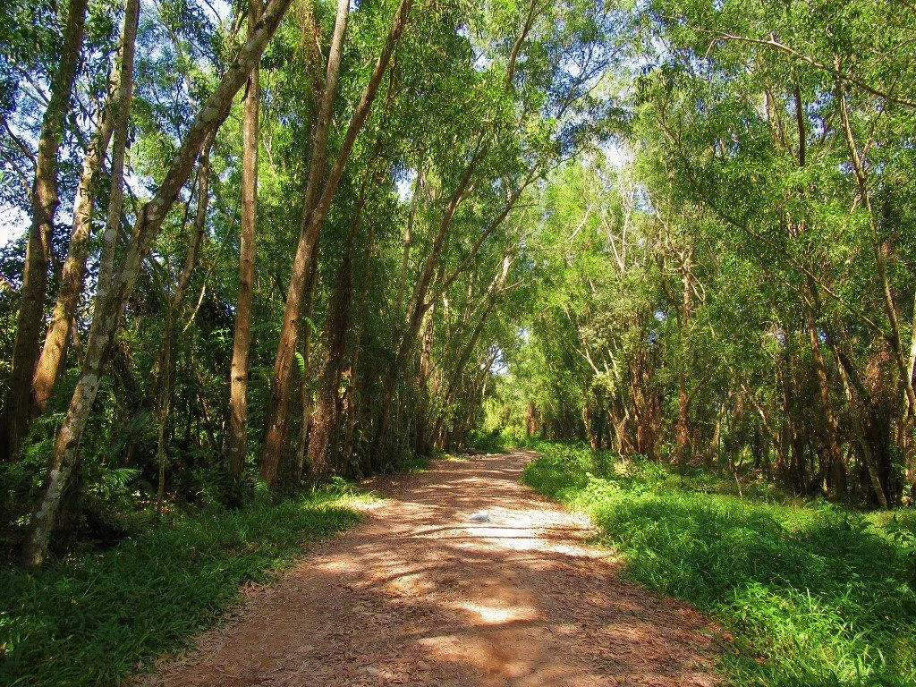 The forests of inland Phu Quoc Island, Vietnam