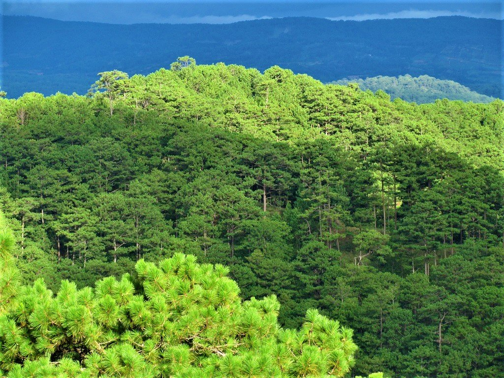 Endless pine forests, Dalat, Vietnam