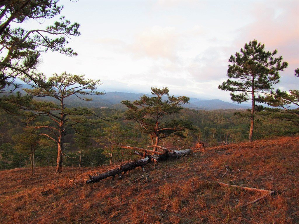 Sunset in the pine forests, Dalat, Vietnam