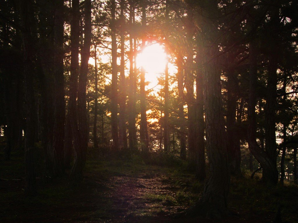 Sunrise through the pine trees, Dalat, Vietnam