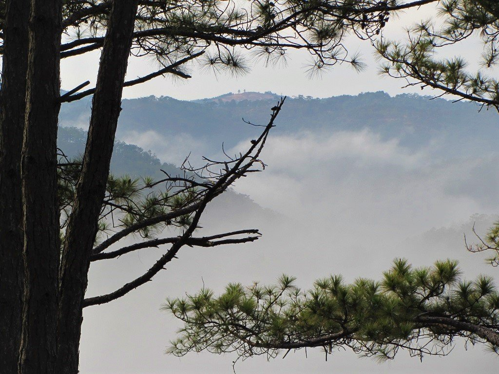 Misty morning in the pine forests, Dalat, Vietnam
