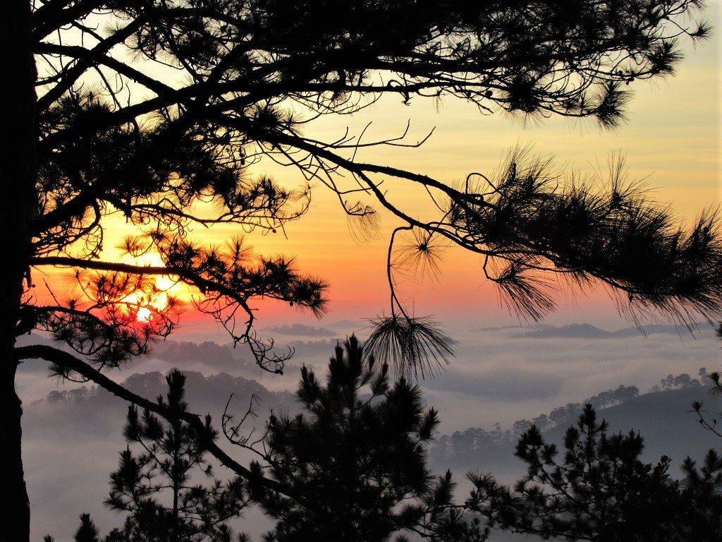 Dawn in the pine forests, Dalat, Vietnam