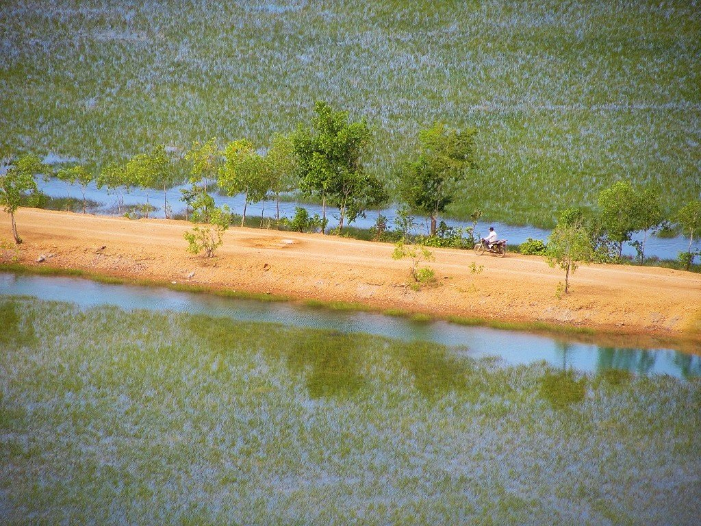 Dyke roads & rice paddies, Mekong Delta, Vietnam