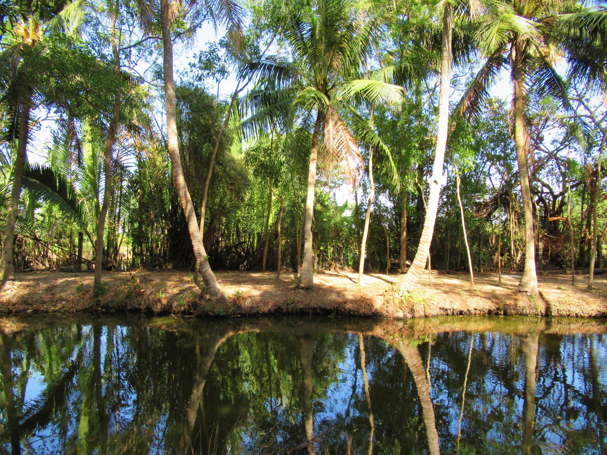 Sacred pond & coconut palms, Tra Vinh Province, Mekong Delta, Vietnam
