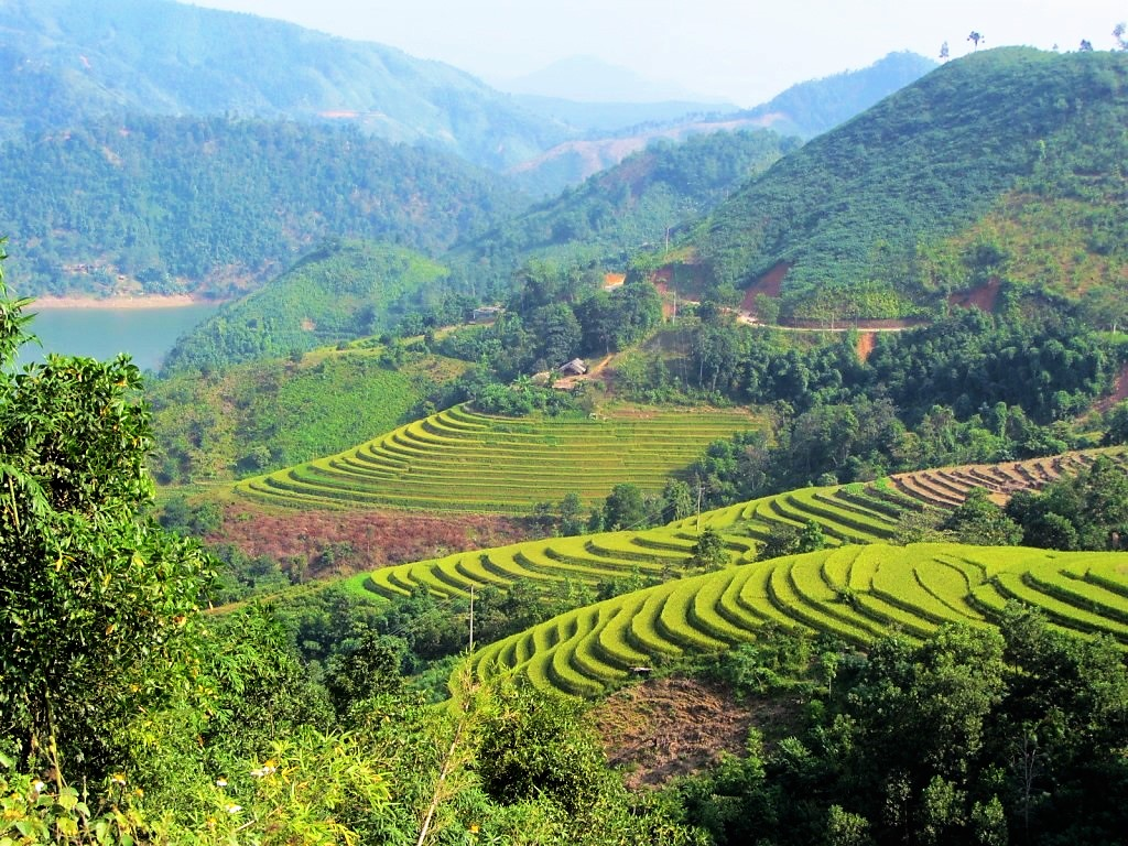 Rice terraces seen from Road DT178