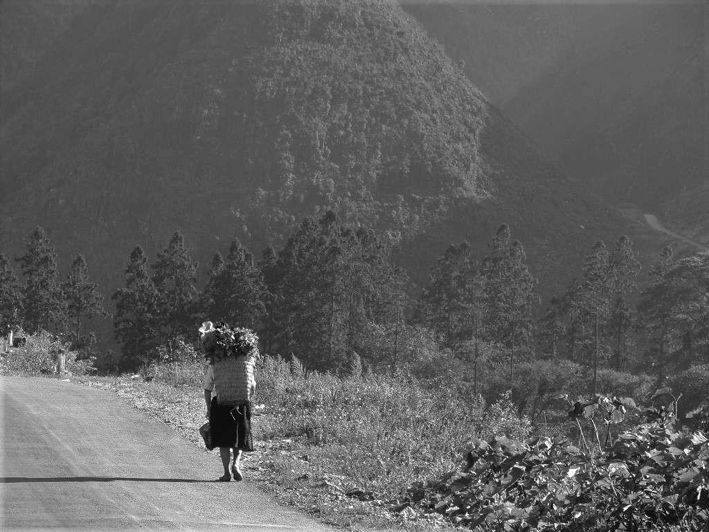 Local woman carrying a heavy harvest on her back