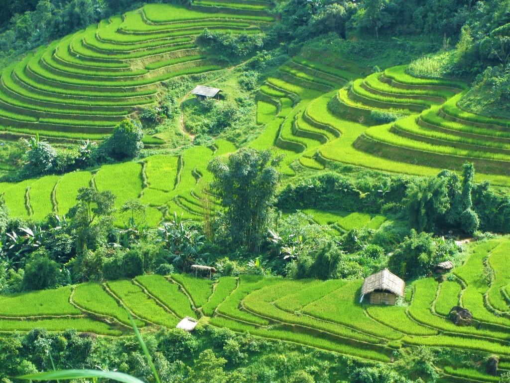 Rice terraces in Hoang Su Phi District