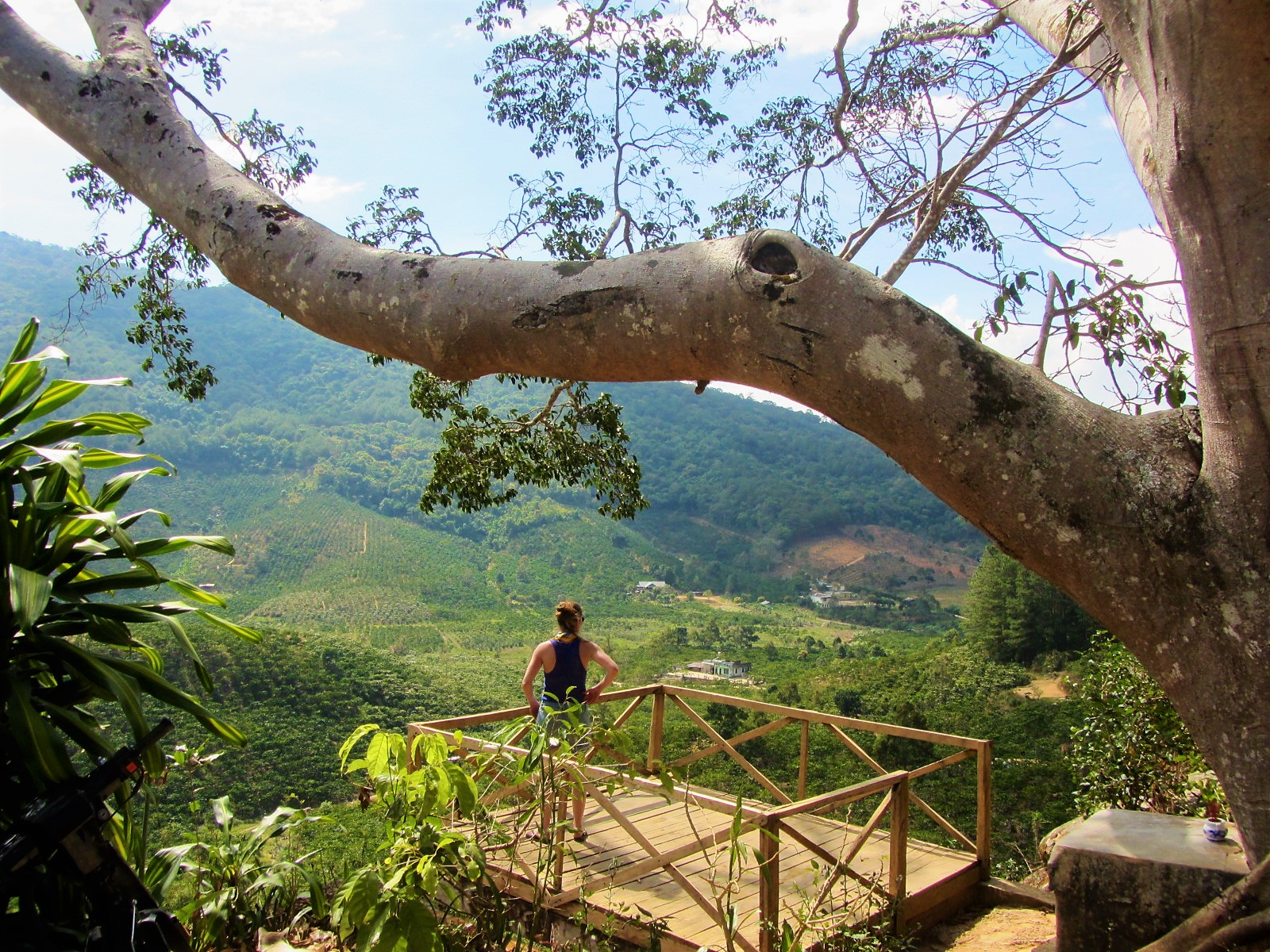 Standing beneath a banyan tree, Central Highlands, Vietnam