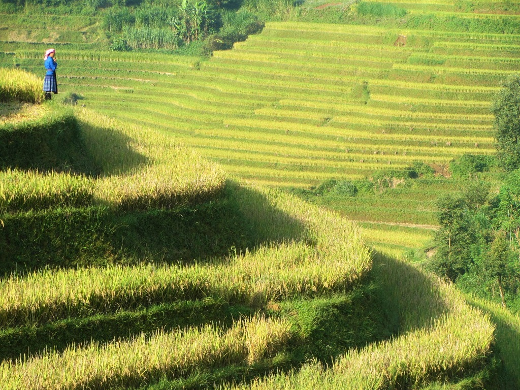 The rice terraces of Mu Cang Chai, northern Vietnam